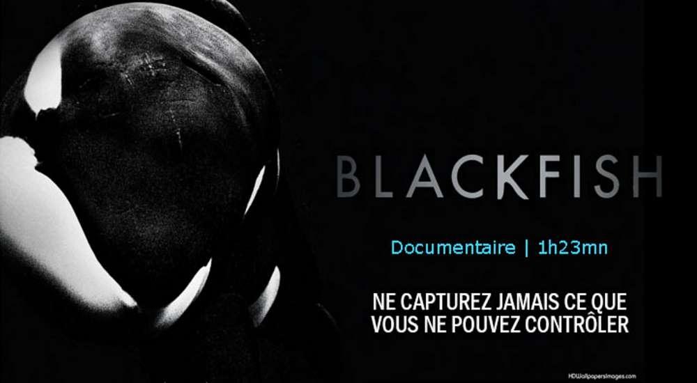 1000x550_video-blackfish_pf.jpg