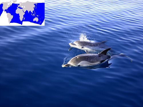 Dolphins_-_map(C)_Dario_Cali_-FLickr.jpg