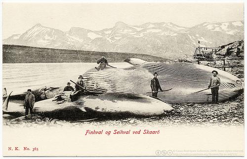 whaling_(C)_postaletrice_FLickr.jpg